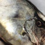 初めてのふるさと納税、島根県浜田市の鮮魚がすごかった!